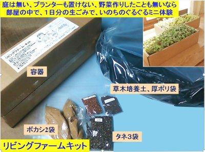 画像1: 部屋の中で、菌ちゃん野菜作り体験 リビングファームキット